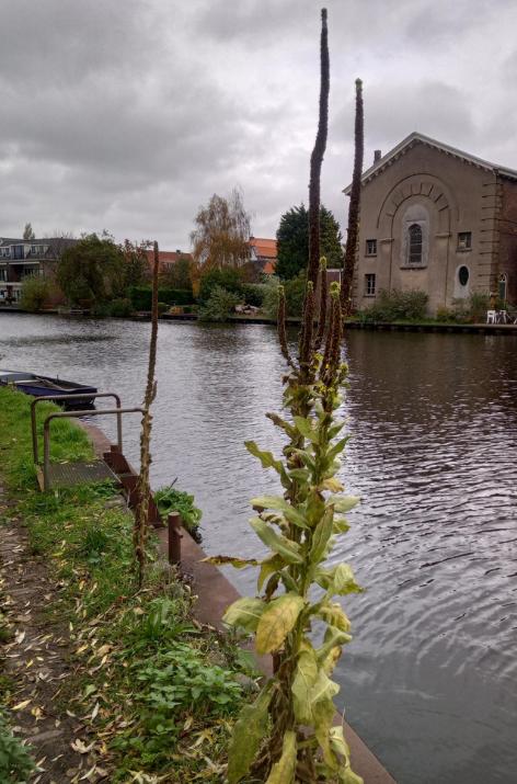 Kerk aan de Schie, uitgebloeide bloemen, donkere lucht