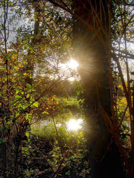 Zon door herfstbomen