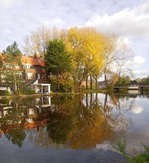 Zonnnige herfstbomen, weerspiegeld in water